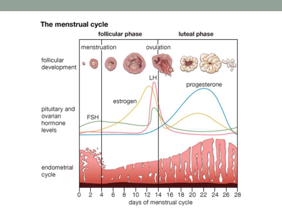 Luteal faz stimülasyon Background Luteal faz IVM: yetkin ve döllenebilen oositler Fertilite prezervasyon için emergency stimülasyon uygulamarından elde edilen deneyim