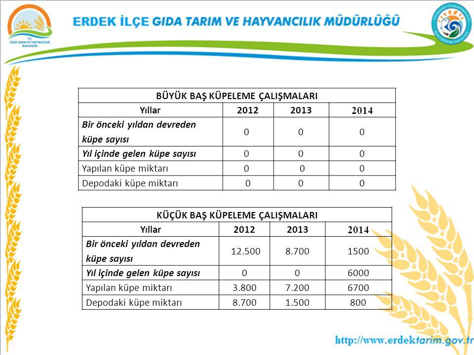 BÜYÜK BAŞ KÜPELEME ÇALIŞMALARI Yıllar20122013 2014 Bir önceki yıldan devreden küpe sayısı 0 0 0 Yıl içinde gelen küpe sayısı0 0 0 Yapılan küpe miktarı