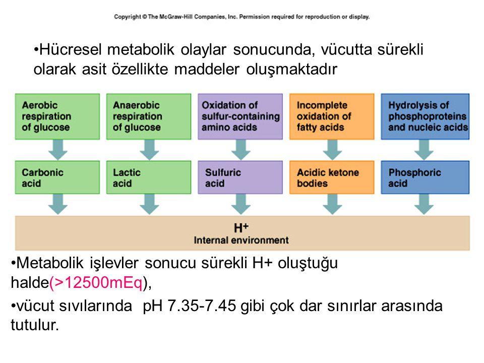 Hücresel metabolik olaylar sonucunda, vücutta sürekli olarak asit özellikte maddeler oluşmaktadır Metabolik işlevler sonucu sürekli H+ oluştuğu halde(>12500mEq), vücut sıvılarında pH 7.35-7.45 gibi çok dar sınırlar arasında tutulur.