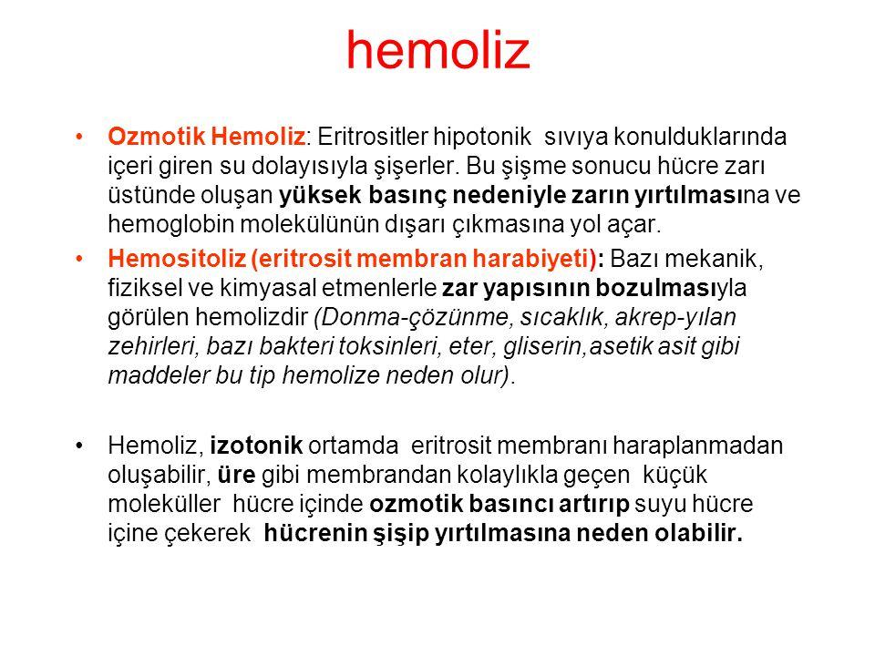 hemoliz Ozmotik Hemoliz: Eritrositler hipotonik sıvıya konulduklarında içeri giren su dolayısıyla şişerler.