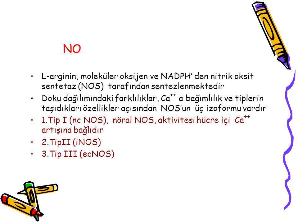 NO L-arginin, moleküler oksijen ve NADPH' den nitrik oksit sentetaz (NOS) tarafından sentezlenmektedir Doku dağılımındaki farklılıklar, Ca ++ a bağımlılık ve tiplerin taşıdıkları özellikler açısından NOS'un üç izoformu vardır 1.Tip I (nc NOS), nöral NOS, aktivitesi hücre içi Ca ++ artışına bağlıdır 2.TipII (iNOS) 3.Tip III (ecNOS)