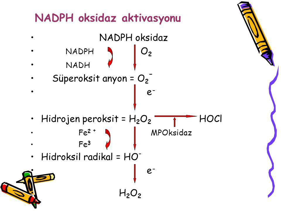 NADPH oksidaz aktivasyonu NADPH oksidaz NADPH O 2 NADH Süperoksit anyon = O 2 - e - Hidrojen peroksit = H 2 O 2 HOCl Fe 2 + MPOksidaz Fe 3 Hidroksil r