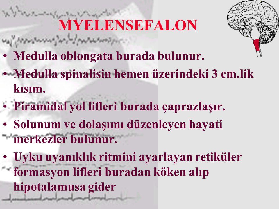 MYELENSEFALON Medulla oblongata burada bulunur.Medulla spinalisin hemen üzerindeki 3 cm.lik kısım.