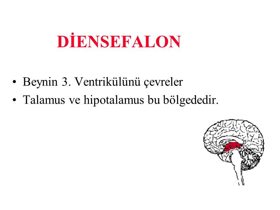 DİENSEFALON Beynin 3. Ventrikülünü çevreler Talamus ve hipotalamus bu bölgededir.