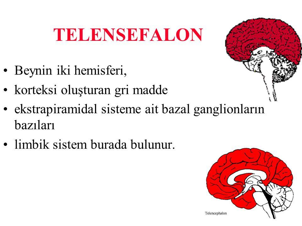 TELENSEFALON Beynin iki hemisferi, korteksi oluşturan gri madde ekstrapiramidal sisteme ait bazal ganglionların bazıları limbik sistem burada bulunur.