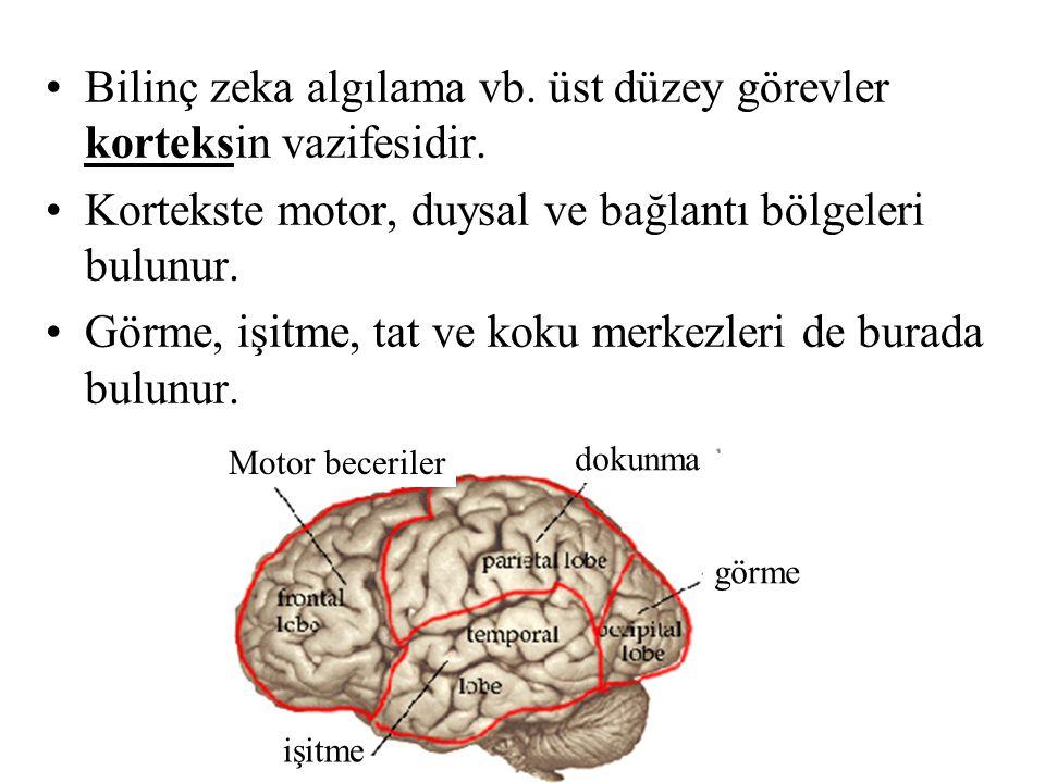Bilinç zeka algılama vb. üst düzey görevler korteksin vazifesidir. Kortekste motor, duysal ve bağlantı bölgeleri bulunur. Görme, işitme, tat ve koku m