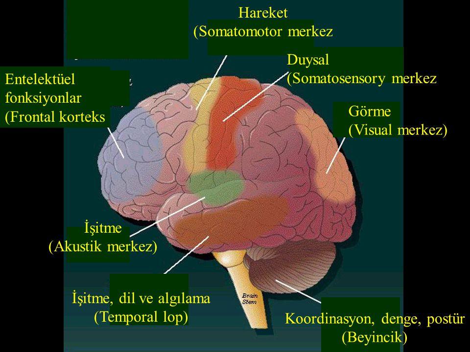 Entelektüel fonksiyonlar (Frontal korteks Hareket (Somatomotor merkez Duysal (Somatosensory merkez Görme (Visual merkez) İşitme (Akustik merkez) İşitm