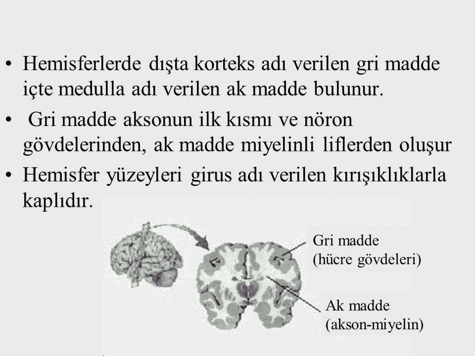 Hemisferlerde dışta korteks adı verilen gri madde içte medulla adı verilen ak madde bulunur. Gri madde aksonun ilk kısmı ve nöron gövdelerinden, ak ma
