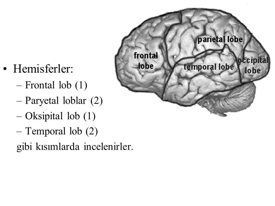 Hemisferler: –Frontal lob (1) –Paryetal loblar (2) –Oksipital lob (1) –Temporal lob (2) gibi kısımlarda incelenirler.