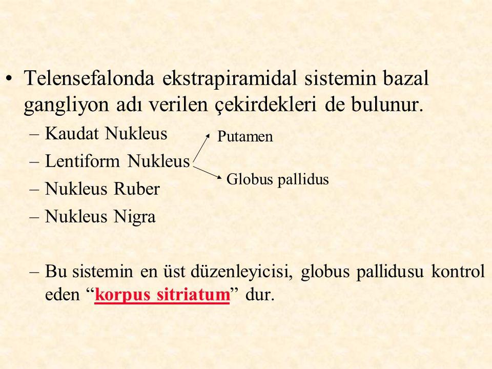 Telensefalonda ekstrapiramidal sistemin bazal gangliyon adı verilen çekirdekleri de bulunur. –Kaudat Nukleus –Lentiform Nukleus –Nukleus Ruber –Nukleu