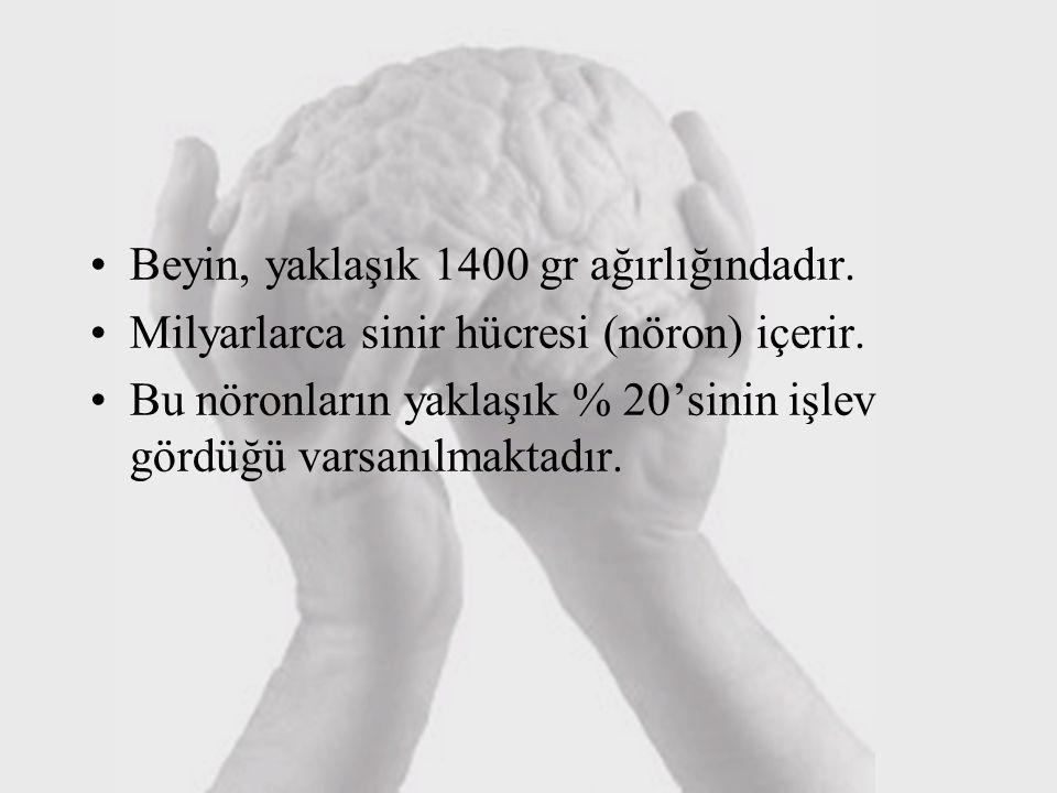 Beyin, yaklaşık 1400 gr ağırlığındadır. Milyarlarca sinir hücresi (nöron) içerir. Bu nöronların yaklaşık % 20'sinin işlev gördüğü varsanılmaktadır.