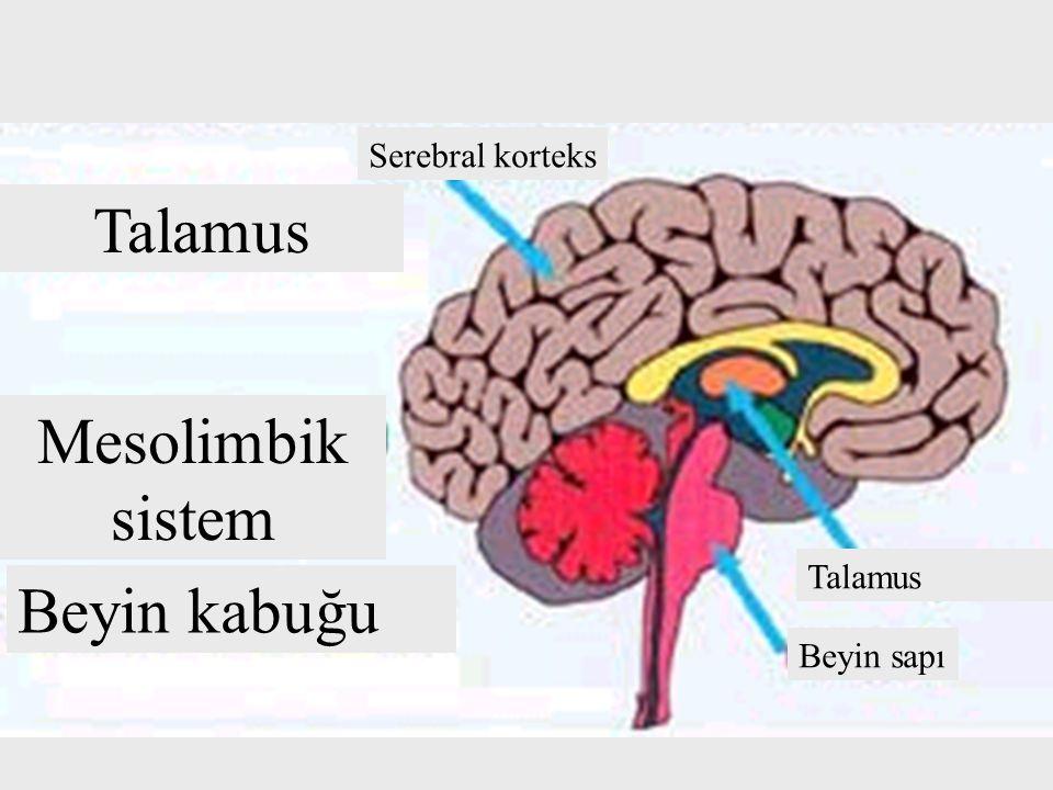 Talamus Beyin kabuğu Mesolimbik sistem Talamus Beyin sapı Serebral korteks