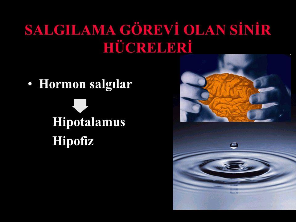 SALGILAMA GÖREVİ OLAN SİNİR HÜCRELERİ Hormon salgılar Hipotalamus Hipofiz