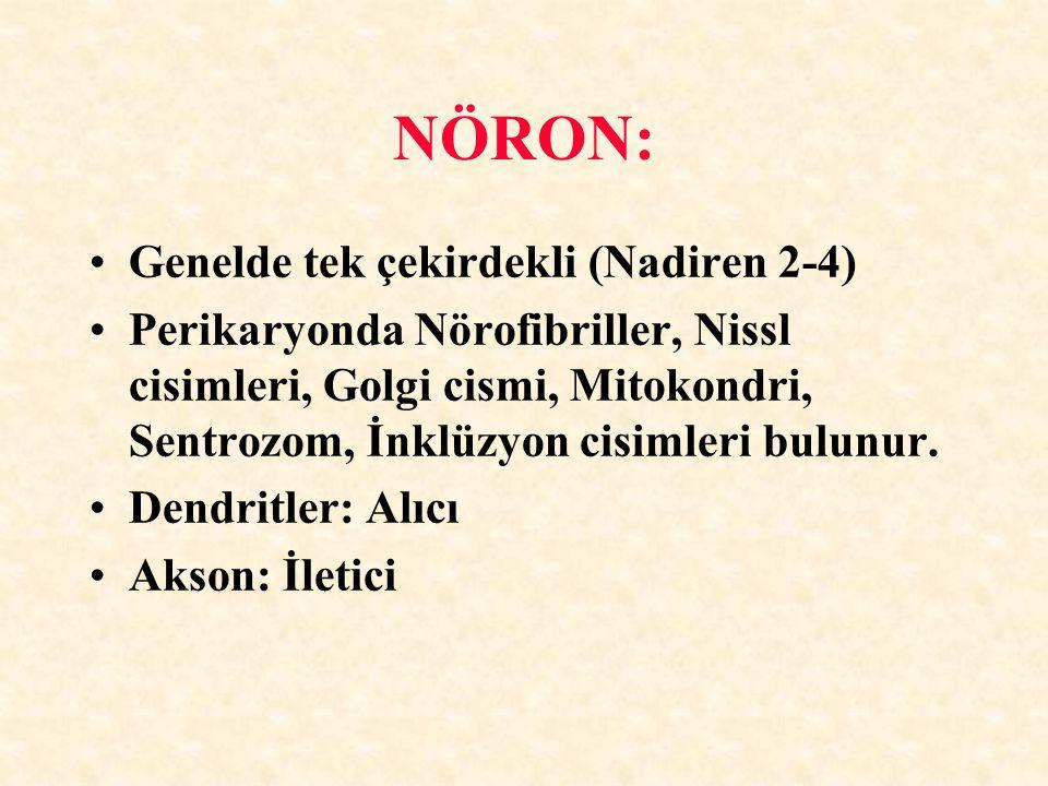NÖRON: Genelde tek çekirdekli (Nadiren 2-4) Perikaryonda Nörofibriller, Nissl cisimleri, Golgi cismi, Mitokondri, Sentrozom, İnklüzyon cisimleri bulun