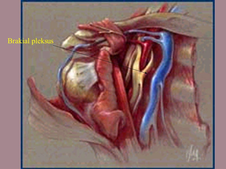 Brakial pleksus