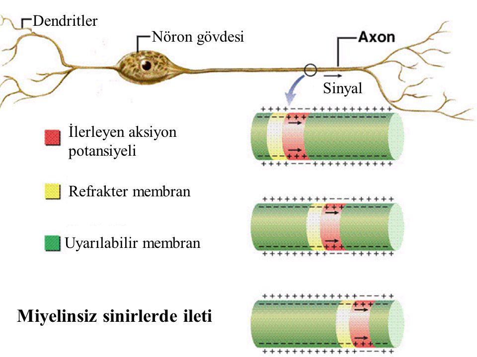 Dendritler Nöron gövdesi Sinyal İlerleyen aksiyon potansiyeli Refrakter membran Uyarılabilir membran Miyelinsiz sinirlerde ileti