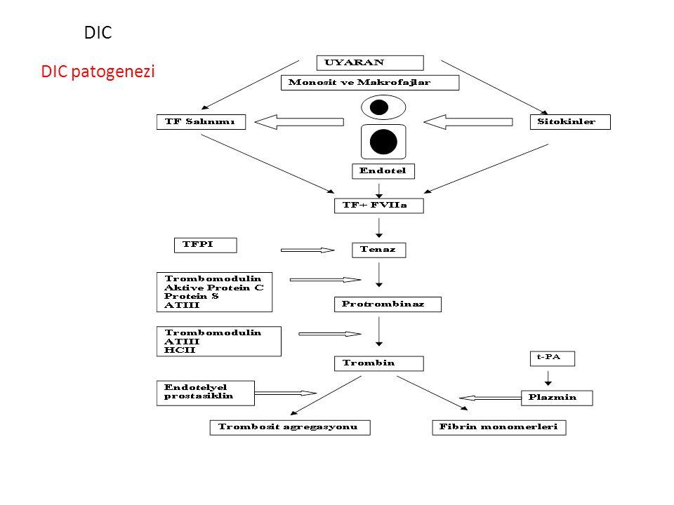 iki mekanizma sitokin ağının aktivasyonu ve bunun sonucunda koagulasyon sisteminin uyarılması (sepsis ve majör travmalar Prokoagulan maddelerin kan ak