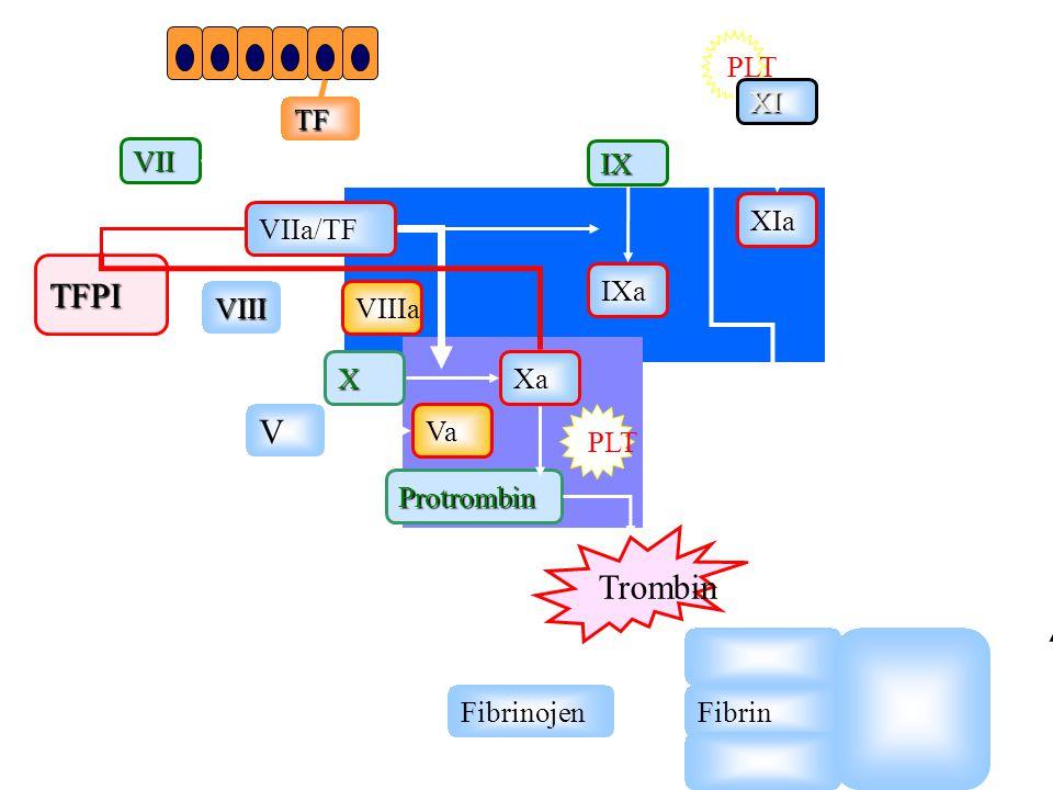 Hemostaz Damar Endoteli Reoloji damar kan akım mekanizmaları Trombositler Koagulasyon kaskadı Antikoagülan sistem Fibrinolitik Sistem WWW. Coumadin.co