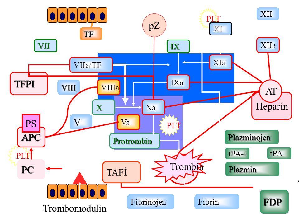 PLT VIIa/TF XIa IX IXa VII XXa XI TF FibrinojenFibrin Trombin Protrombin VIIIa Va V VIII TFPI PLT
