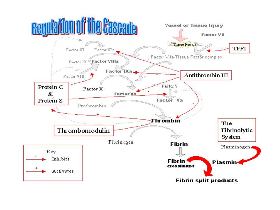 Heparin Trombin XII XIIa VIIa/TF XIa IX IXa VII XXa XI TF FibrinojenFibrin Trombin Protrombin VIIIa Trombomodulin Va V VIII TFPI AT PC APC Plazminojen