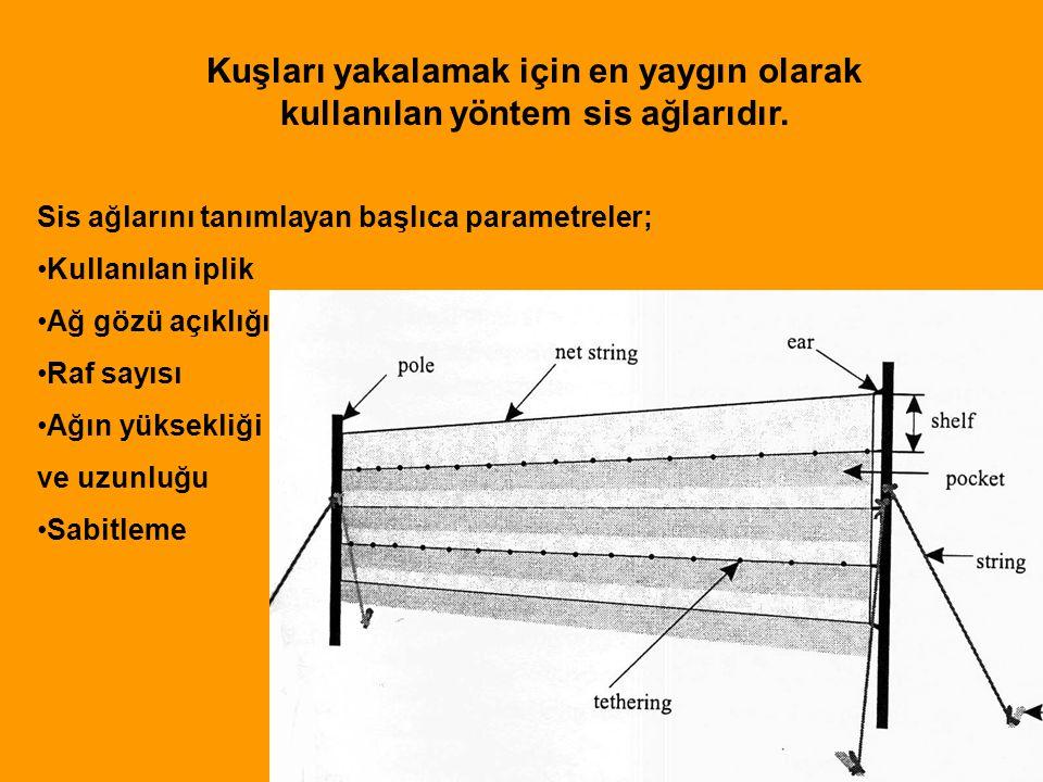 Kuşları yakalamak için en yaygın olarak kullanılan yöntem sis ağlarıdır.