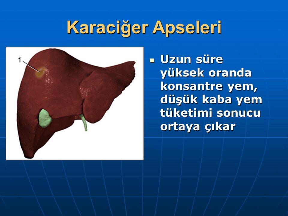 Karaciğer Apseleri Uzun süre yüksek oranda konsantre yem, düşük kaba yem tüketimi sonucu ortaya çıkar Uzun süre yüksek oranda konsantre yem, düşük kab