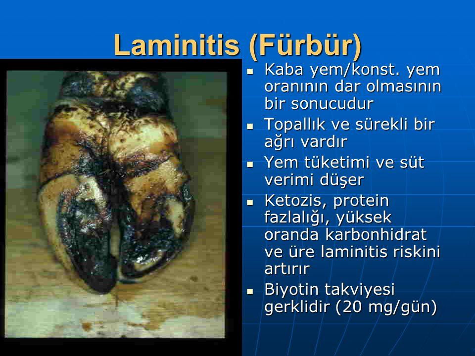 Laminitis (Fürbür) Kaba yem/konst.yem oranının dar olmasının bir sonucudur Kaba yem/konst.