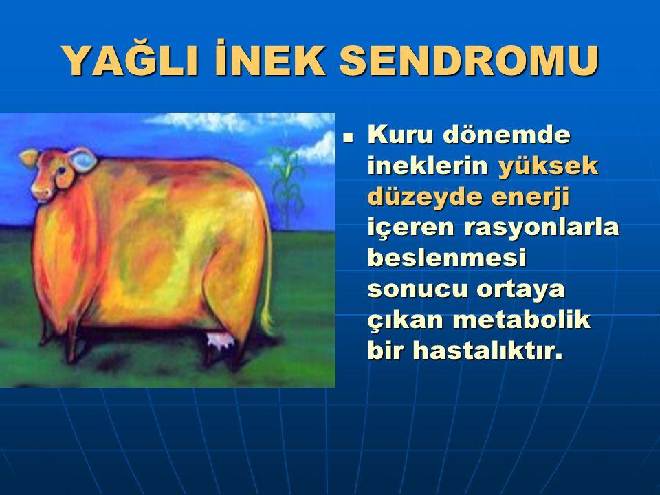YAĞLI İNEK SENDROMU Kuru dönemde ineklerin yüksek düzeyde enerji içeren rasyonlarla beslenmesi sonucu ortaya çıkan metabolik bir hastalıktır. Kuru dön