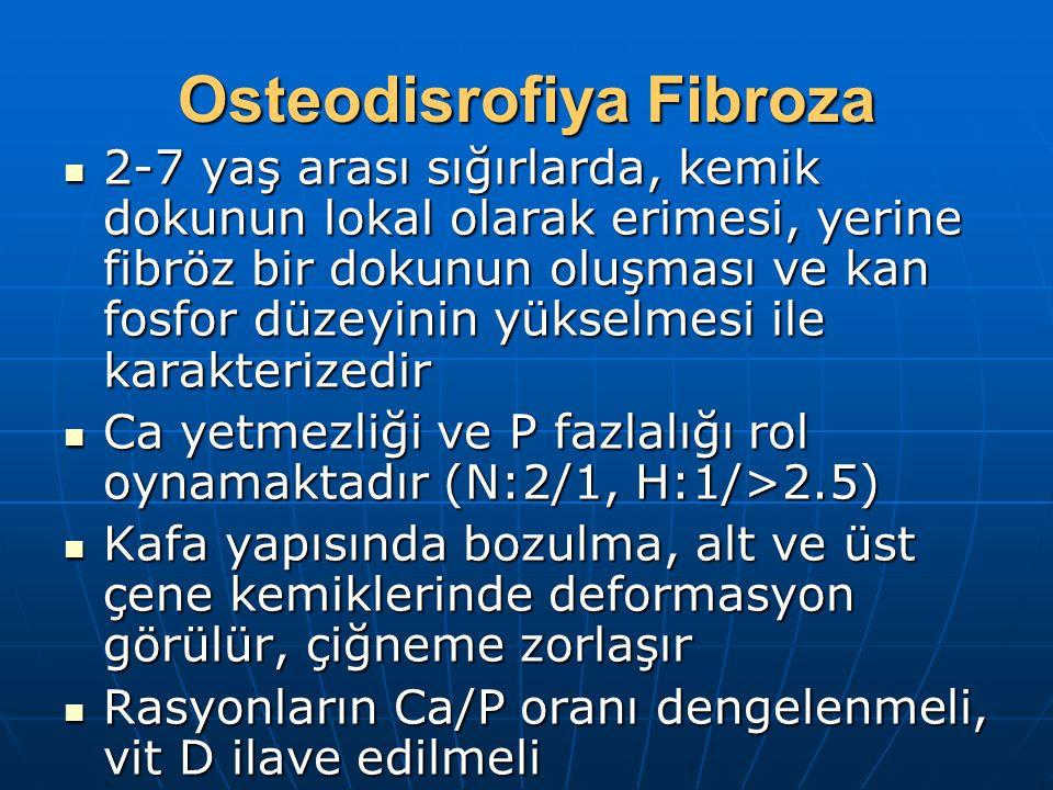 Osteodisrofiya Fibroza 2-7 yaş arası sığırlarda, kemik dokunun lokal olarak erimesi, yerine fibröz bir dokunun oluşması ve kan fosfor düzeyinin yükselmesi ile karakterizedir 2-7 yaş arası sığırlarda, kemik dokunun lokal olarak erimesi, yerine fibröz bir dokunun oluşması ve kan fosfor düzeyinin yükselmesi ile karakterizedir Ca yetmezliği ve P fazlalığı rol oynamaktadır (N:2/1, H:1/>2.5) Ca yetmezliği ve P fazlalığı rol oynamaktadır (N:2/1, H:1/>2.5) Kafa yapısında bozulma, alt ve üst çene kemiklerinde deformasyon görülür, çiğneme zorlaşır Kafa yapısında bozulma, alt ve üst çene kemiklerinde deformasyon görülür, çiğneme zorlaşır Rasyonların Ca/P oranı dengelenmeli, vit D ilave edilmeli Rasyonların Ca/P oranı dengelenmeli, vit D ilave edilmeli