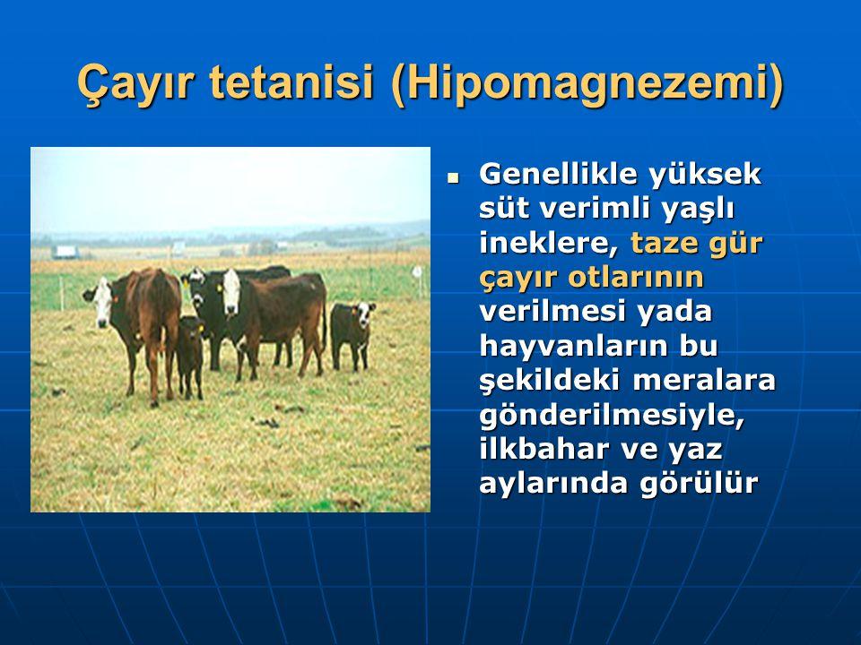 Çayır tetanisi (Hipomagnezemi) Genellikle yüksek süt verimli yaşlı ineklere, taze gür çayır otlarının verilmesi yada hayvanların bu şekildeki meralara gönderilmesiyle, ilkbahar ve yaz aylarında görülür Genellikle yüksek süt verimli yaşlı ineklere, taze gür çayır otlarının verilmesi yada hayvanların bu şekildeki meralara gönderilmesiyle, ilkbahar ve yaz aylarında görülür