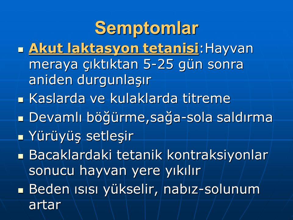 Semptomlar Akut laktasyon tetanisi:Hayvan meraya çıktıktan 5-25 gün sonra aniden durgunlaşır Akut laktasyon tetanisi:Hayvan meraya çıktıktan 5-25 gün