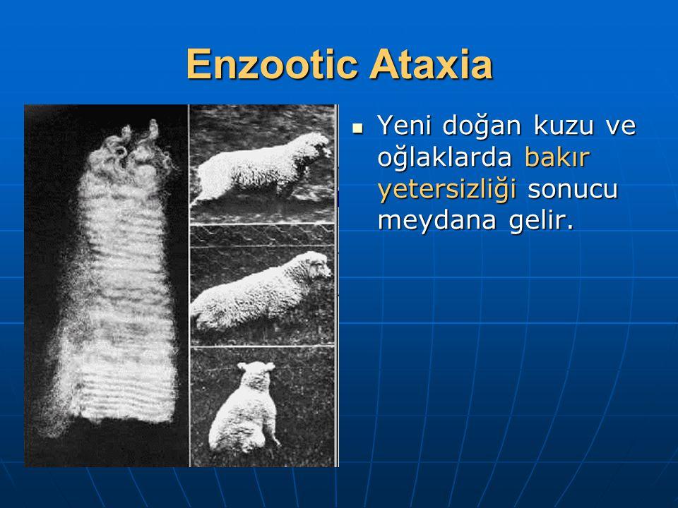 Enzootic Ataxia Yeni doğan kuzu ve oğlaklarda bakır yetersizliği sonucu meydana gelir. Yeni doğan kuzu ve oğlaklarda bakır yetersizliği sonucu meydana