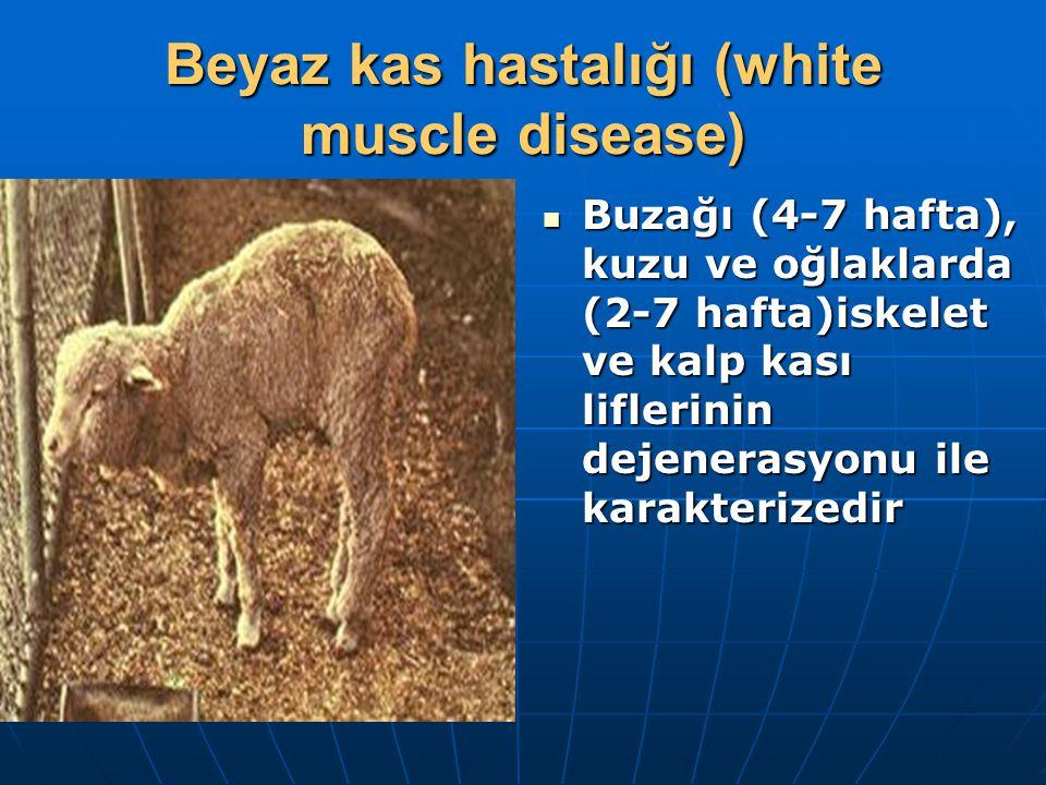 Beyaz kas hastalığı (white muscle disease) Buzağı (4-7 hafta), kuzu ve oğlaklarda (2-7 hafta)iskelet ve kalp kası liflerinin dejenerasyonu ile karakterizedir Buzağı (4-7 hafta), kuzu ve oğlaklarda (2-7 hafta)iskelet ve kalp kası liflerinin dejenerasyonu ile karakterizedir