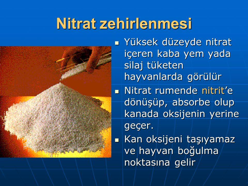 Nitrat zehirlenmesi Yüksek düzeyde nitrat içeren kaba yem yada silaj tüketen hayvanlarda görülür Yüksek düzeyde nitrat içeren kaba yem yada silaj tüketen hayvanlarda görülür Nitrat rumende nitrit'e dönüşüp, absorbe olup kanada oksijenin yerine geçer.