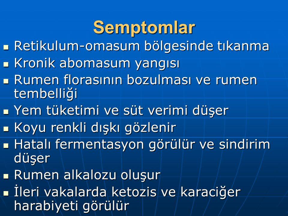 Semptomlar Retikulum-omasum bölgesinde tıkanma Retikulum-omasum bölgesinde tıkanma Kronik abomasum yangısı Kronik abomasum yangısı Rumen florasının bo