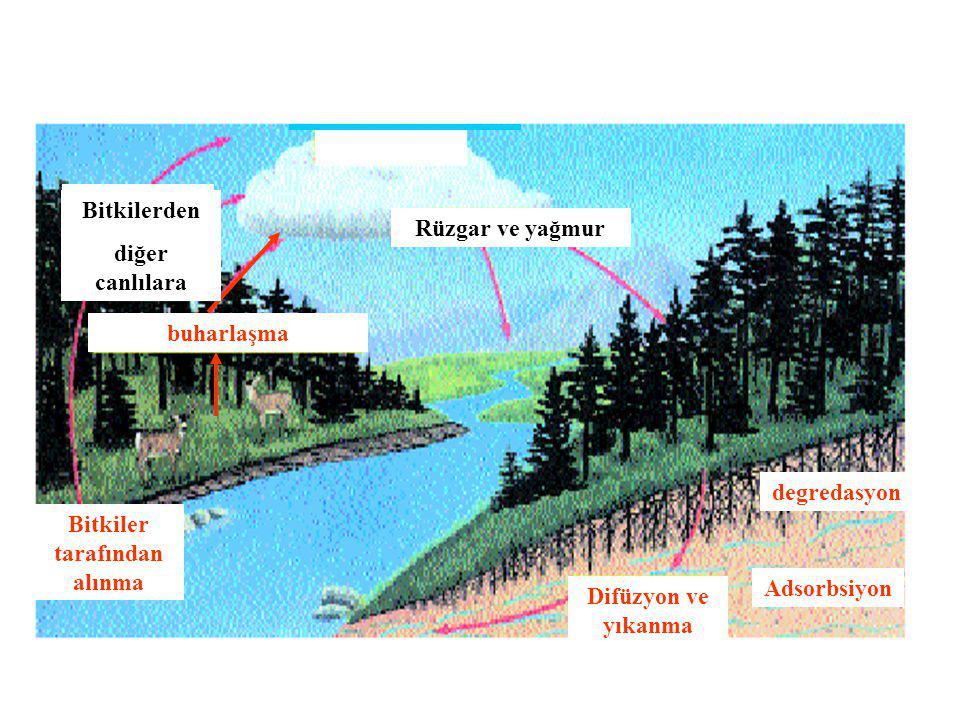 buharlaşma Bitkilerden diğer canlılara Rüzgar ve yağmur Difüzyon ve yıkanma Adsorbsiyon Bitkiler tarafından alınma degredasyon