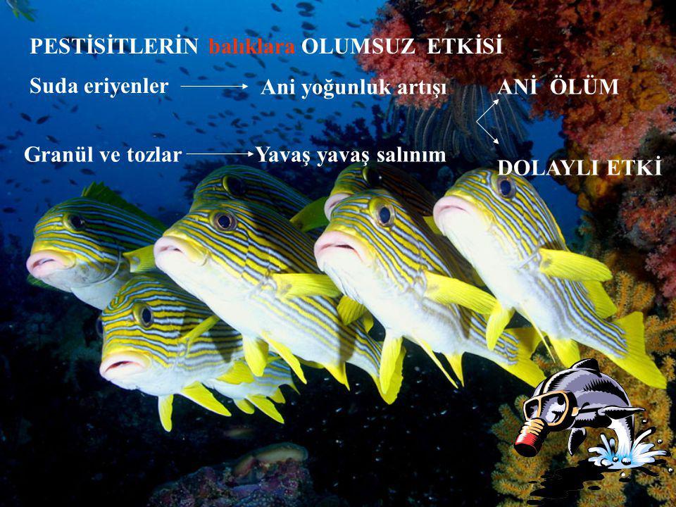 Suda eriyenler PESTİSİTLERİN balıklara OLUMSUZ ETKİSİ Granül ve tozlar Ani yoğunluk artışı Yavaş yavaş salınım ANİ ÖLÜM DOLAYLI ETKİ