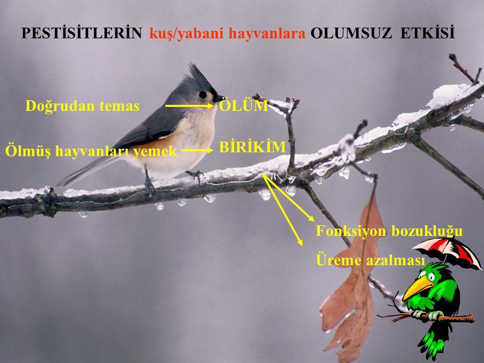 Doğrudan temas PESTİSİTLERİN kuş/yabani hayvanlara OLUMSUZ ETKİSİ Ölmüş hayvanları yemek ÖLÜM BİRİKİM Fonksiyon bozukluğu Üreme azalması
