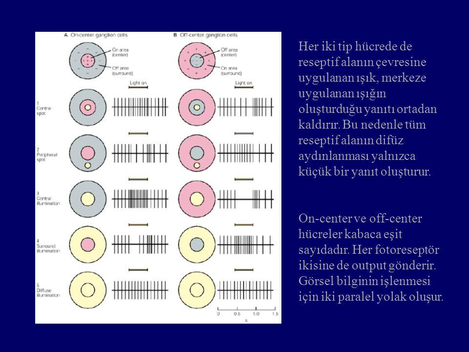 Her iki tip hücrede de reseptif alanın çevresine uygulanan ışık, merkeze uygulanan ışığın oluşturduğu yanıtı ortadan kaldırır. Bu nedenle tüm reseptif