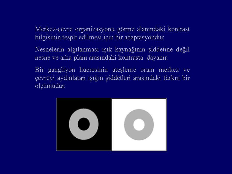 Merkez-çevre organizasyonu görme alanındaki kontrast bilgisinin tespit edilmesi için bir adaptasyondur. Nesnelerin algılanması ışık kaynağının şiddeti