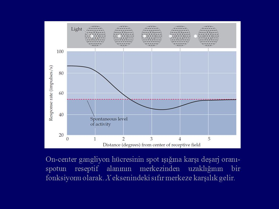 On-center gangliyon hücresinin spot ışığına karşı deşarj oranı- spotun reseptif alanının merkezinden uzaklığının bir fonksiyonu olarak. X eksenindeki