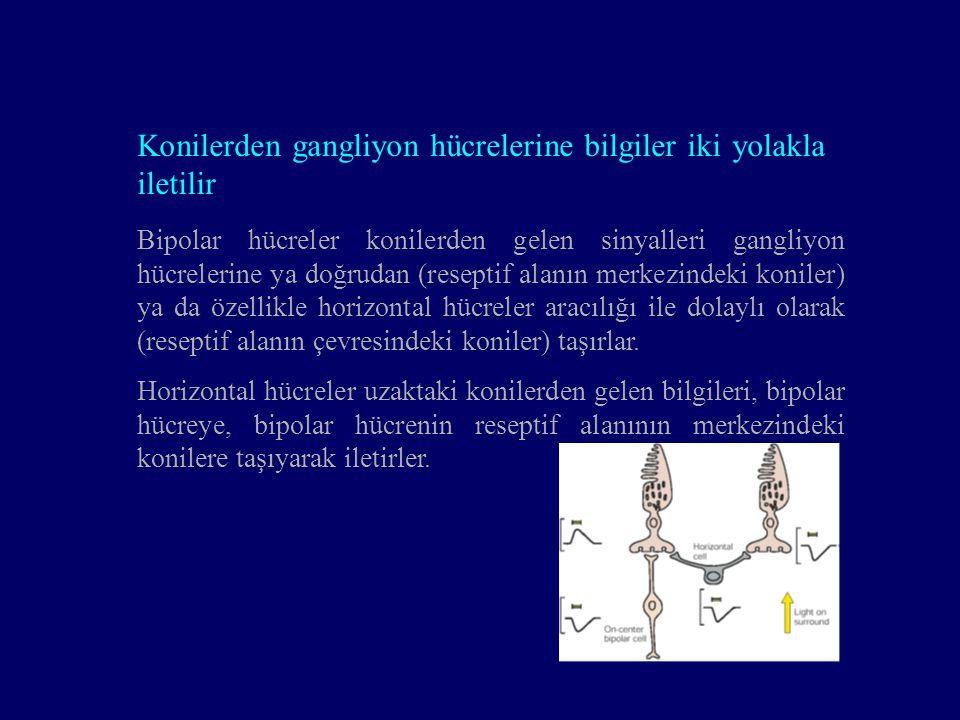 Bipolar hücreler konilerden gelen sinyalleri gangliyon hücrelerine ya doğrudan (reseptif alanın merkezindeki koniler) ya da özellikle horizontal hücre