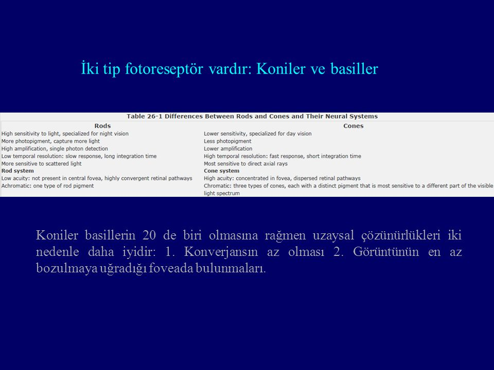 İki tip fotoreseptör vardır: Koniler ve basiller Koniler basillerin 20 de biri olmasına rağmen uzaysal çözünürlükleri iki nedenle daha iyidir: 1. Konv