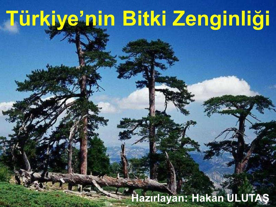 Türkiye'nin Bitki Zenginliği Hazırlayan: Hakan ULUTAŞ