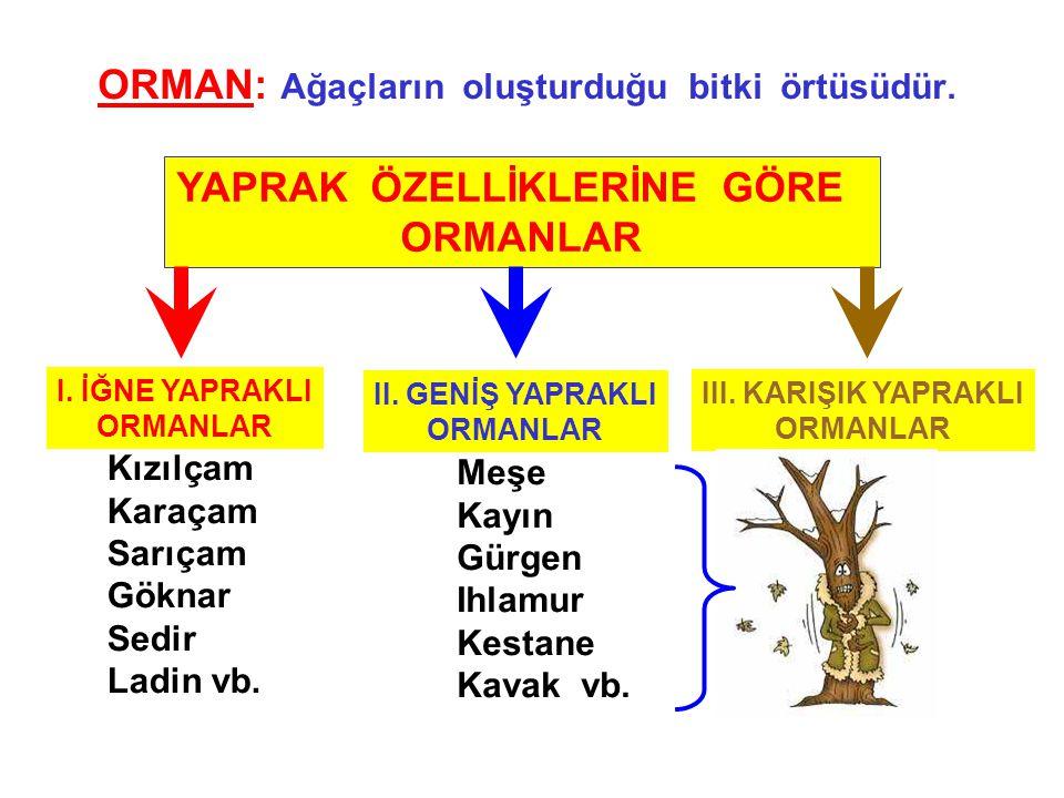 ORMAN: Ağaçların oluşturduğu bitki örtüsüdür. YAPRAK ÖZELLİKLERİNE GÖRE ORMANLAR I. İĞNE YAPRAKLI ORMANLAR II. GENİŞ YAPRAKLI ORMANLAR III. KARIŞIK YA