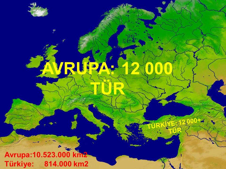 AVRUPA: 12 000 TÜR TÜRKİYE: 12 000+ TÜR Avrupa:10.523.000 km2 Türkiye: 814.000 km2
