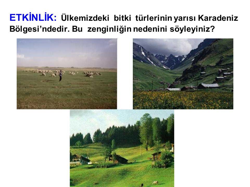 ETKİNLİK: Ülkemizdeki bitki türlerinin yarısı Karadeniz Bölgesi'ndedir. Bu zenginliğin nedenini söyleyiniz?