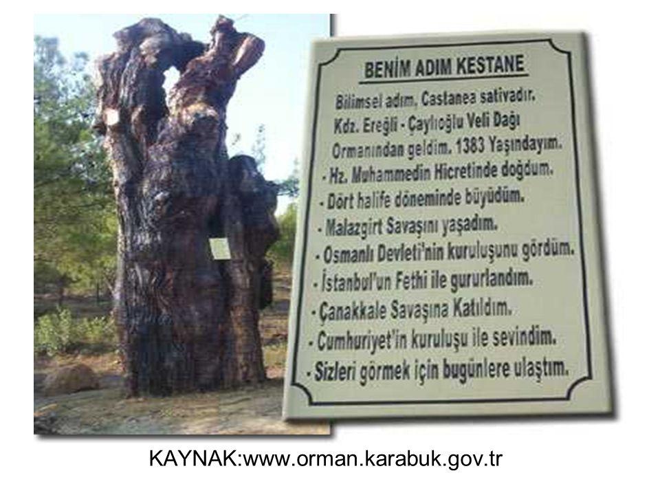 KAYNAK:www.orman.karabuk.gov.tr