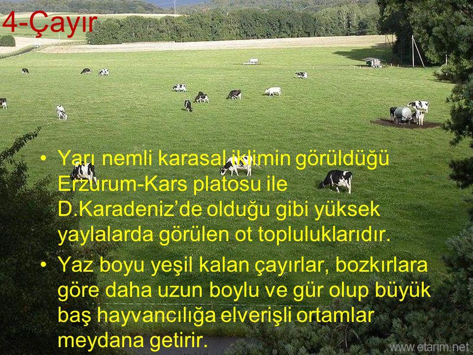 4-Çayır Yarı nemli karasal iklimin görüldüğü Erzurum-Kars platosu ile D.Karadeniz'de olduğu gibi yüksek yaylalarda görülen ot topluluklarıdır. Yaz boy