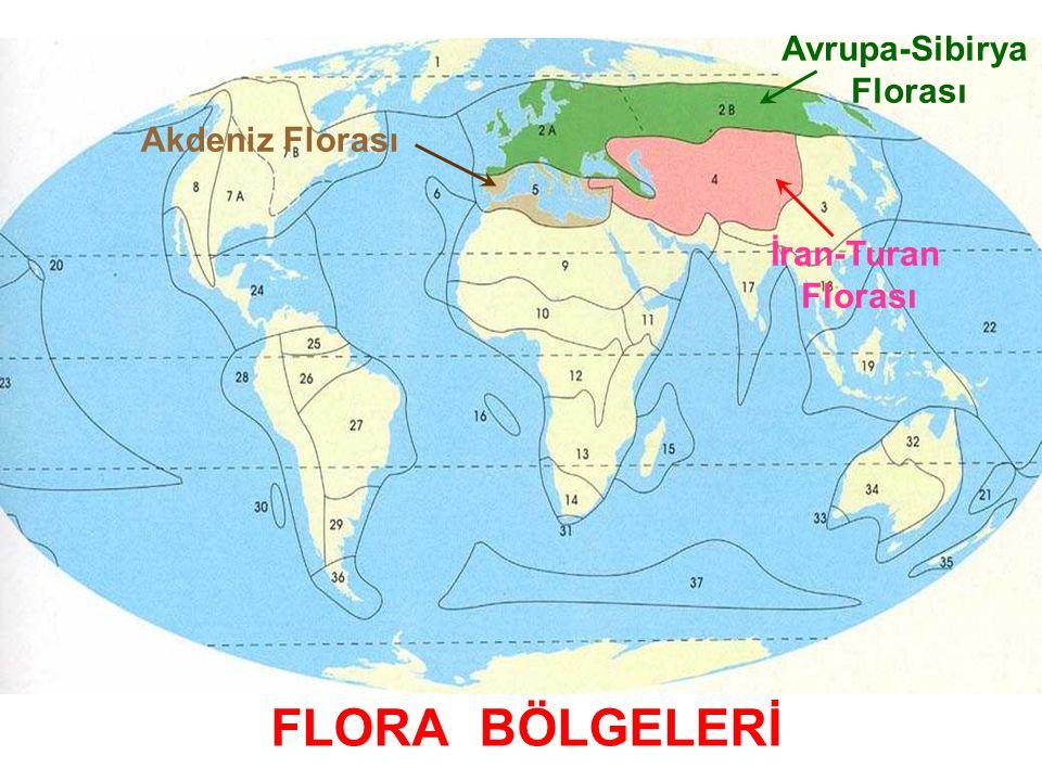 FLORA BÖLGELERİ Akdeniz Florası İran-Turan Florası Avrupa-Sibirya Florası